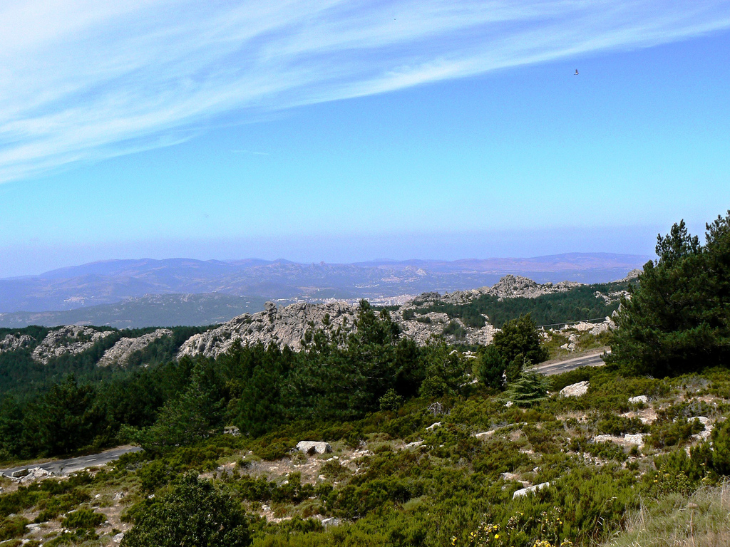 Foresta Monte Limbara, Berchidda | Foto Flickr Gienepien (© BY-NC-ND 3.0 IT)