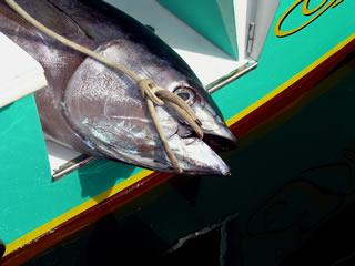 Piatti Di Pesce In Sardegna Cuore Di Tonno Itenovascom Made