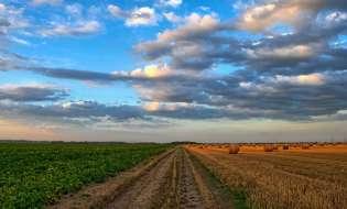Agricoltura in crescita al Sud, Sardegna al sesto posto