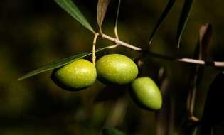 Chanel punta sulle olive della Sardegna per la nuova crema antirughe: VIDEO