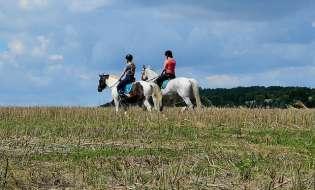 Equitazione, concorso top in Sardegna