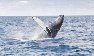 Registratori 3D sulle coste sarde per monitorare i cetacei