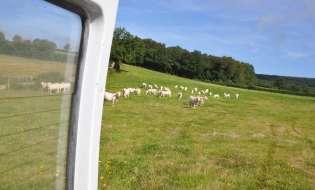 Da bovini di Palau e Arzachena carni tra le migliori d'Italia