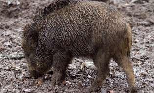 Fauna selvatica: un milione per risarcire i danni ai sardi