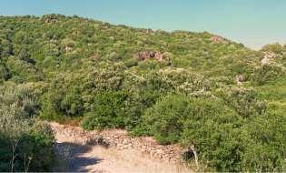 Foreste di Sardegna: Monte Arci - Acquafrida
