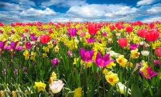 E' arrivata la Primavera!