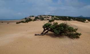 Spiagge di Sardegna: Spiaggia di Piscinas