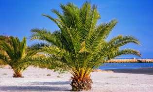 Il significato della Domenica delle Palme