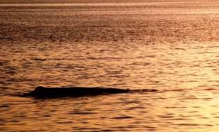 Airgun: per ora è salvo il Mar di Sardegna