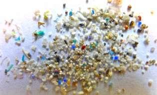 Le microplastiche mettono a rischio il cibo del nostro mare