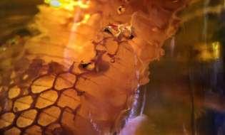 Il dolce e naturale miele sardo: il superfood che ci accompagna dalle origini - 2