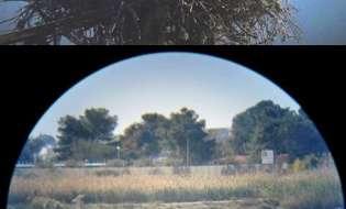 Grazie al lockdown in Sardegna tornano nidi di specie rare