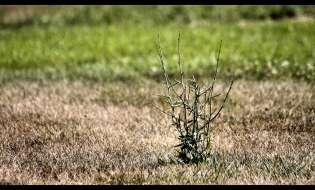 Piogge: allarme siccità in Sardegna, in calo fino al 45%