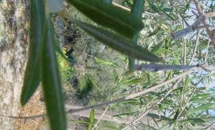 Una rete di giardini sardi per contrastare il cambio del clima