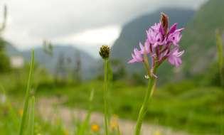 Parchi: nasce a Marceddì il primo dedicato alle orchidee