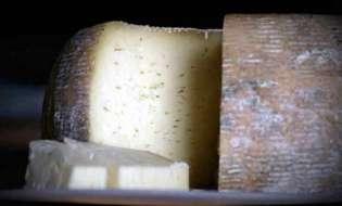 Pecorino da record a Loculi, forma con 1600 litri di latte
