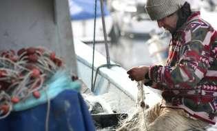 Dalle meduse al crollo della pesca il caldo colpisce il mare