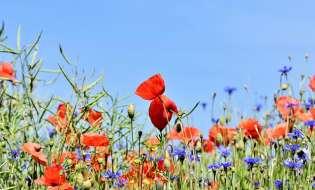 Biodiversità a rischio: meeting sulla flora sul Gennargentu
