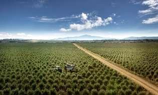Un olio sardo è tra i primi 100 del mondo