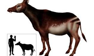 Viene dalla Sardegna l'antico ruminante antenato delle giraffe