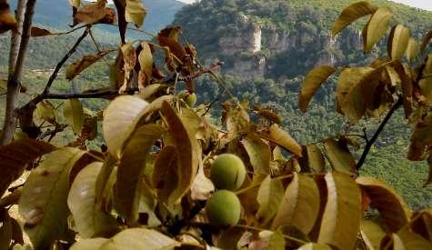 L'interno Sardegna tra spopolamento e speranza smart working