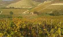 Il Nùrule di Dorgali premiato come miglior vino rosso italiano