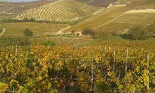 Gambero Rosso: 12 vini sardi tra i migliori d'Italia