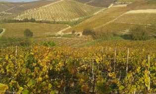 Vendemmia in Sardegna, meno vino ma più buono