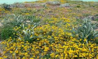 Il progetto Maristanis tutela le zone umide del Sinis